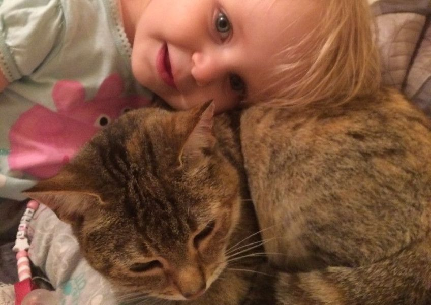 Apology given over pet cat's ashes mistake | Wigan Today