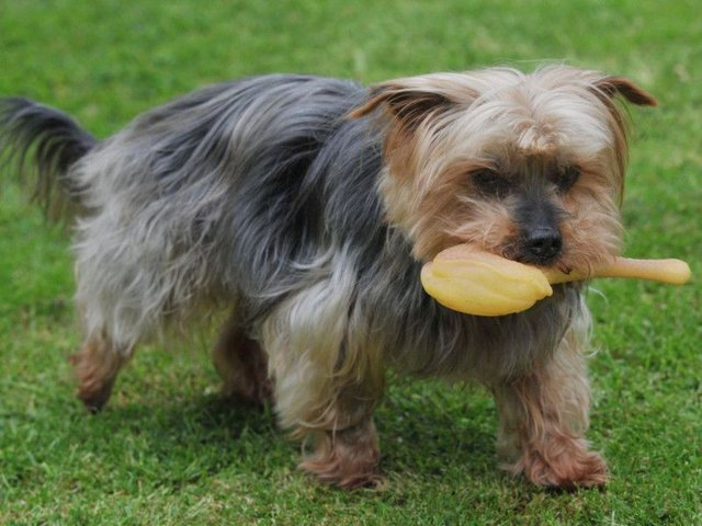 Remarkable Turnaround For Wigan Dog Which Vets Said Should Be Put Down Wigan Today