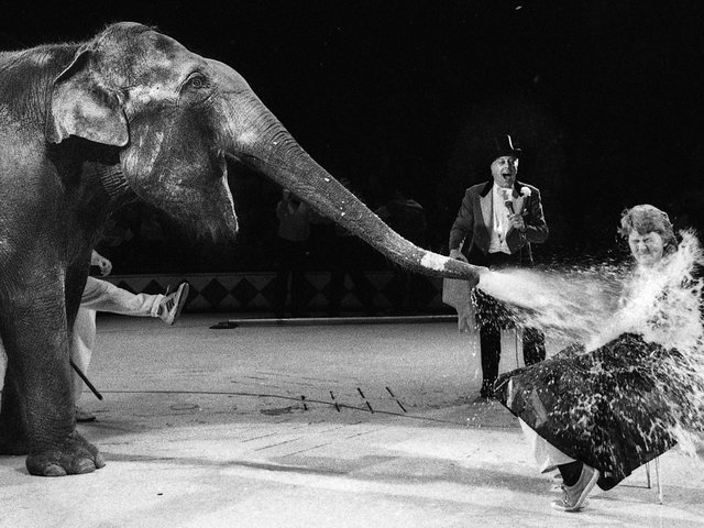 Orrell teacher Laura Turner is sprayed with gallons of water by Alexandra the elephant at Blackpool Tower Circus for a special wash and shampoo session,  she won in a National Children's Home Charity auction, October 1989.