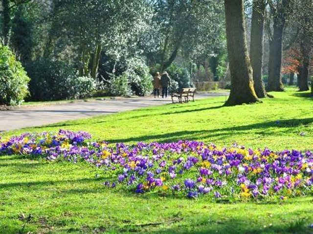 Spring is on its way at Mesnes Park