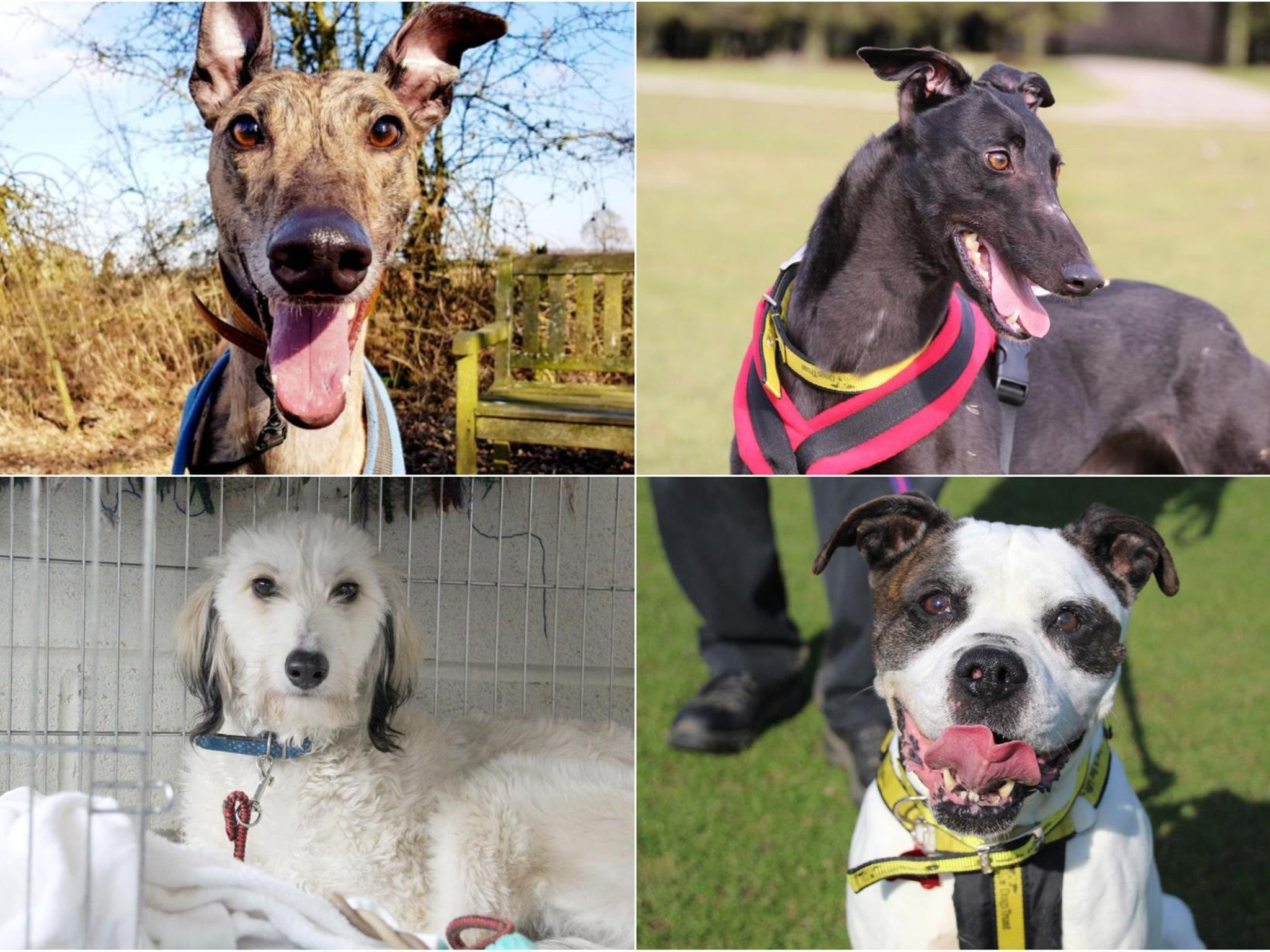 Meet Laura, Patches, River and Rumba: The newest Leeds Dogs Trust dogs urgently looking for a home