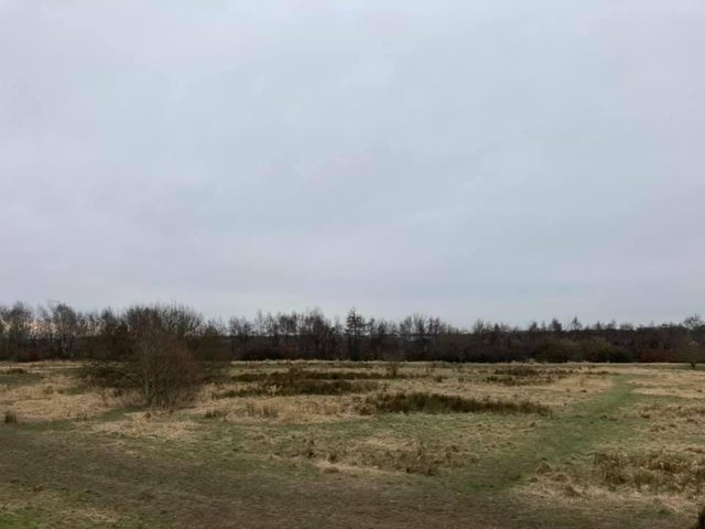 The site where the woodmeadow will be. Photo by The Notre Society