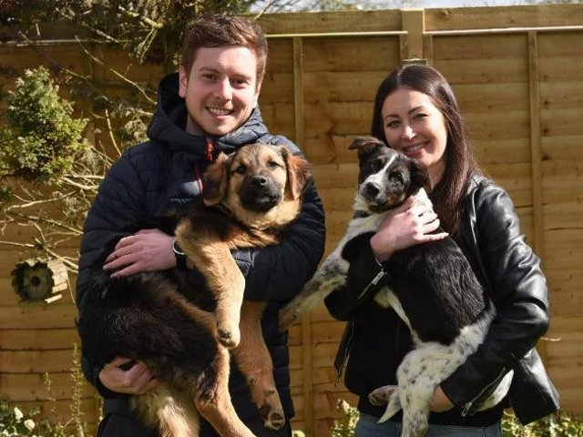 Joe Fielding and fiancee Shelby I'Anson with pet dogs Duke and Dexter