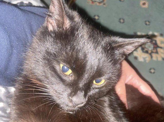 Police are investigating the death of a cat in Orrell