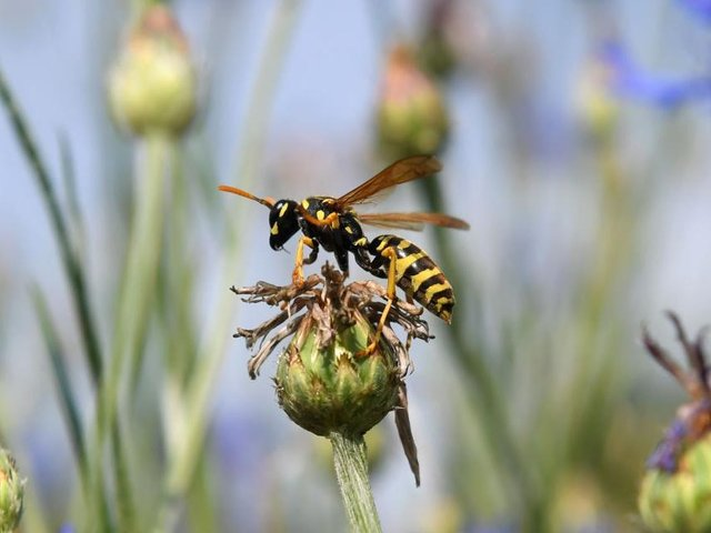 Wasps deserve to be valued as much as bees