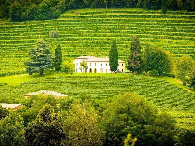 'Sometimes it's the angle of the slope in a specific spot, or the grapes are along the outside edge of the vineyard and are kept cooler by the breezes, but they all show some common regional similarities and a little of the winemaker magic'Picture: JORG PETER/PIXABAY