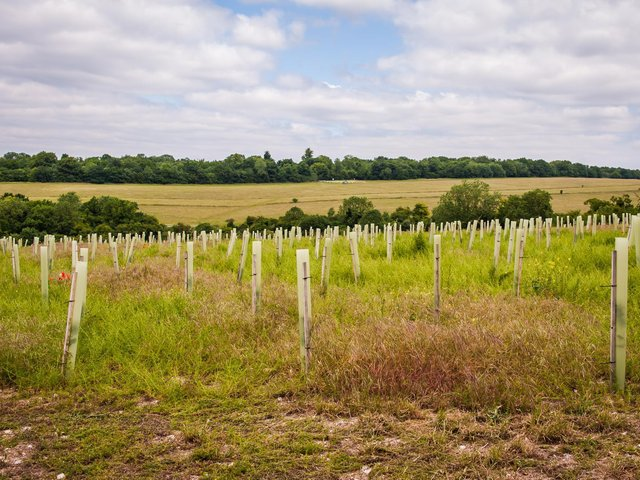 Millions of trees have already been planted through the scheme. Photo by: Ben Lee/WTML