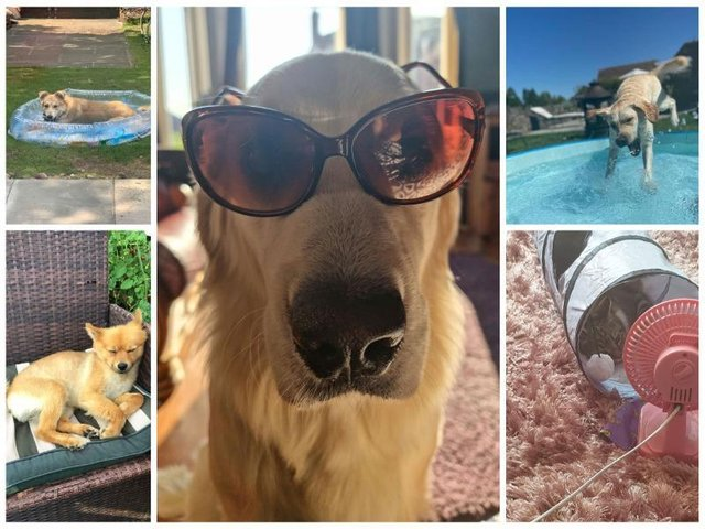 Pet owners across Wigan shared their easy hacks to keep their furry friends cool in the summer heat.